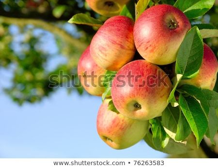 Colorful outdoor shot containing a bunch of red apples on a bran Stock photo © inxti