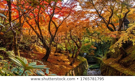 Brightly colored leaves during autumn Stock photo © Zhukow
