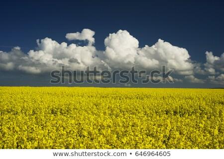 フィールド · 空 · 雲 · 花 · ツリー · 春 - ストックフォト © jarin13