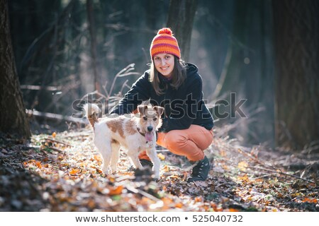 Feminino raposa terrier branco cão pergunta Foto stock © cynoclub