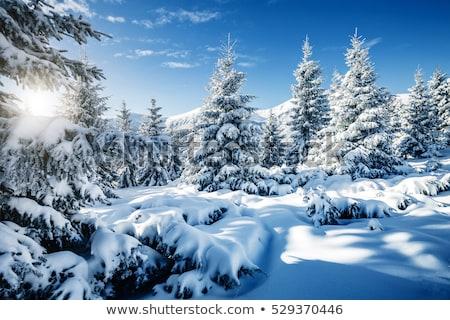 Tél izzó lucfenyő hó kék karácsony Stock fotó © romvo