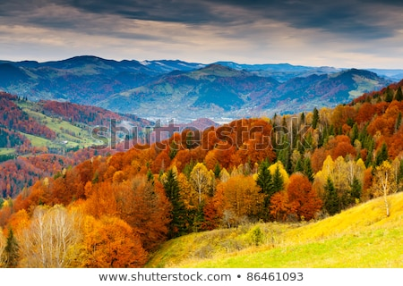 autumn landscape with forest and mountains stock photo © kotenko