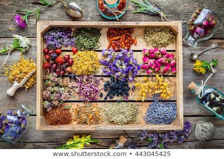 naturalismo · floral · chá · infusão · secar - foto stock © keko64