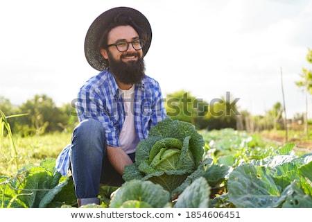 человека капуста голову природы сельского хозяйства роста Сток-фото © IS2