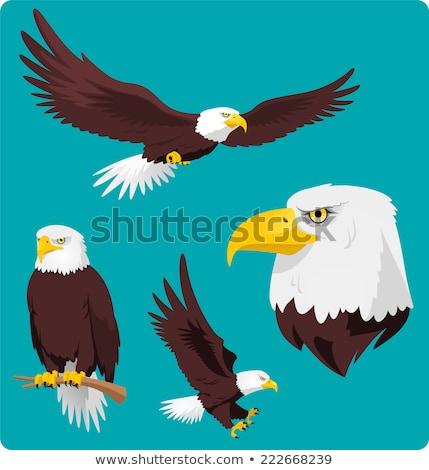 Cartoon лысые орел Flying иллюстрация улыбаясь Сток-фото © cthoman