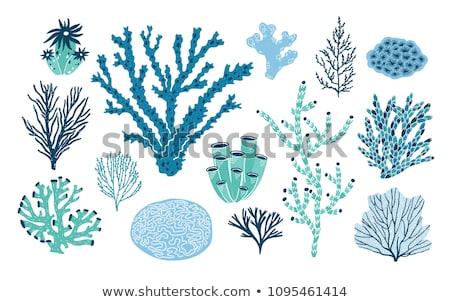 Various Algae and Marine Creatures Illustration Stock photo © robuart