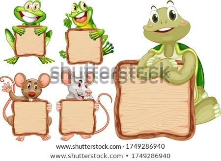 черепахи сведению шаблон иллюстрация текстуры дизайна Сток-фото © bluering