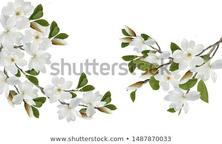 Appelboom bloemen voorjaar natuur Stockfoto © Anneleven