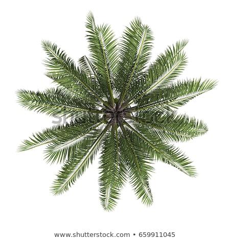 View of palm trees Stock photo © stoonn