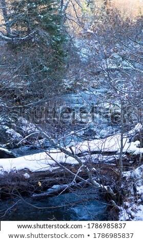 Mooie sneeuw kreek rivier ijs natuur Stockfoto © Kotenko