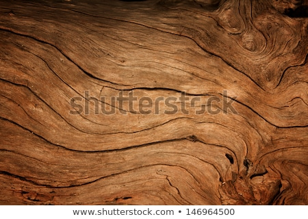 texture of an old tree closeup Stock photo © OleksandrO