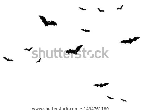 Illustratie bat halloween maan dier vleugels Stockfoto © Blue_daemon