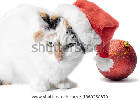Sinistro piccolo cat cartoon illustrazione guardando Foto d'archivio © cthoman