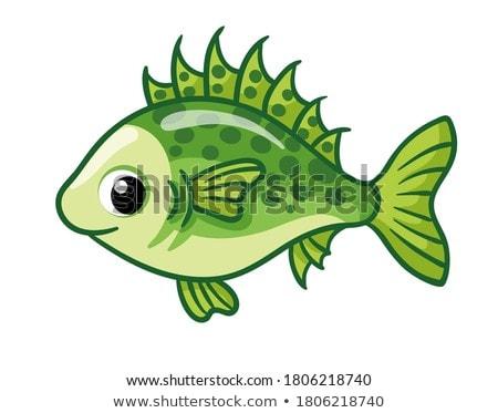 piranha · izolált · lát · hal · fehér · absztrakt - stock fotó © rastudio