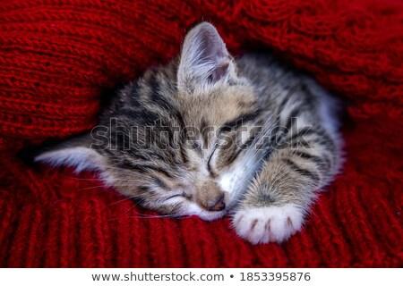 Alszik aranyos kicsi baba piros fehér Stock fotó © juniart