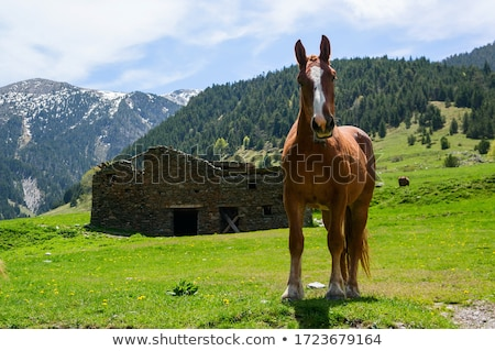 horse landscape in green meadow pyrenees stock photo © lunamarina