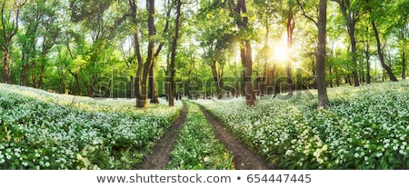 green field with white flowers Stock photo © mycola