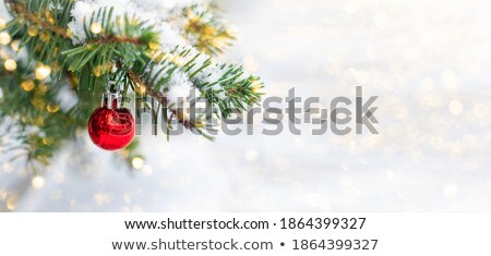 Branches covered with snow close-up Stock photo © Antartis