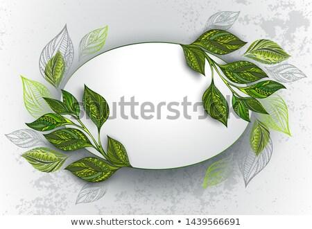 овальный баннер чай листьев зеленые листья свет Сток-фото © blackmoon979