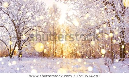 Gyönyörű naplemente erdő fa erdő tájkép Stock fotó © serg64