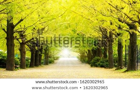 Ginkgo Road Stock photo © vichie81