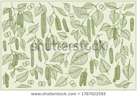 huş · ağacı · ağaç · yaprakları · beyaz · ahşap · sığ - stok fotoğraf © AGfoto