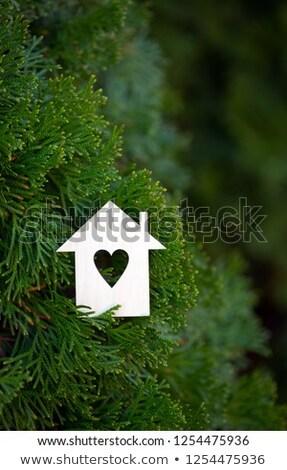 kalp · kesmek · ağaç · doğal · doku · bahar - stok fotoğraf © galitskaya