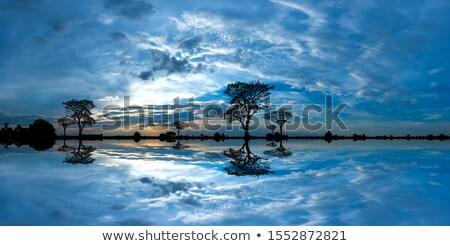 silhouetted tree stock photo © thp