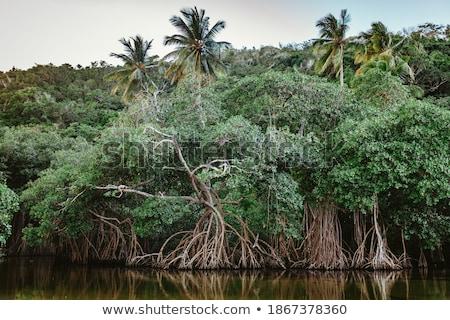 морской · пейзаж · деревья · тропические · побережье · воды · дерево - Сток-фото © pakhnyushchyy