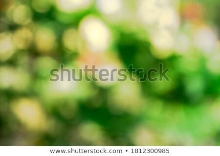 Shining defocused highlights in autumn trees Stock photo © Smileus