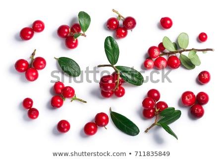Lingonberry vaccinium vitis-idaea, top view, paths Stock photo © maxsol7