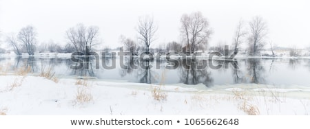 White winter forest in a cold winter day. Stock photo © digoarpi