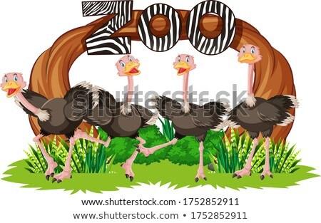 Struzzo zoo banner illustrazione sorriso natura Foto d'archivio © bluering