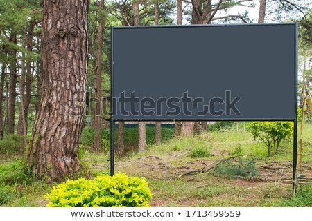 Niebo drzewo drogowego drewna Zdjęcia stock © kawing921