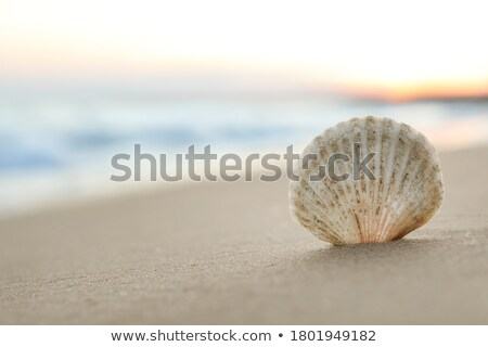 Photo stock: Sable · accent · faible · plage · mer