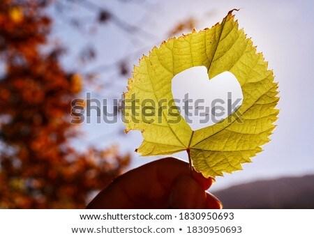 gesneden · hart · boom · textuur · hout · bos - stockfoto © sfinks
