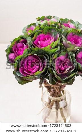 Purple ornamental cabbage on a white background Stock photo © Zerbor