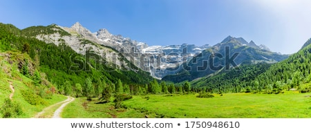 Pyrenees trees forest mountain summer scenics Stock photo © lunamarina
