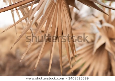 Nature abstract texture with leaves and dry grass Stock photo © Kotenko