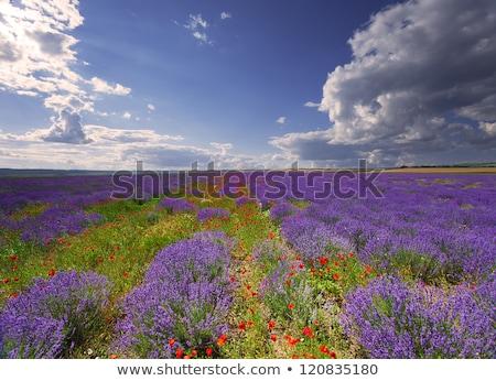 Summer landscape in the Crimea stock photo © artfotoss