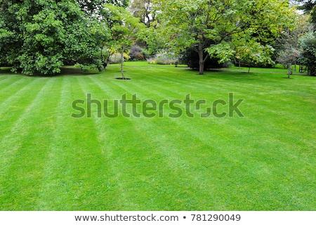 spring lawn landscape stock photo © alphaspirit