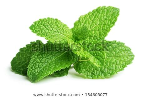 Fresh mint leaves Stock photo © Supertrooper