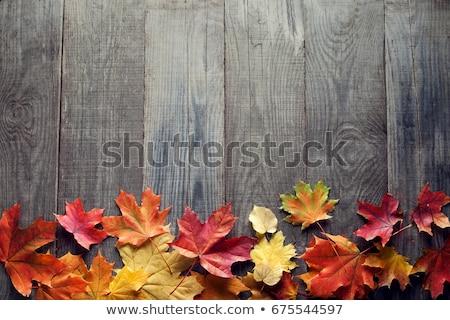Giallo foglia verde autunno vecchio legno Foto d'archivio © galitskaya