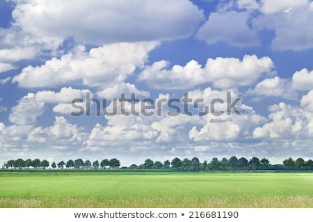 Row of trees and wide grassland Stock photo © Ansonstock