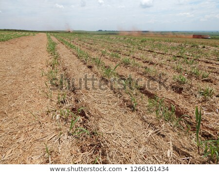 Dried brown plants in a fallow time  Stock photo © lunamarina