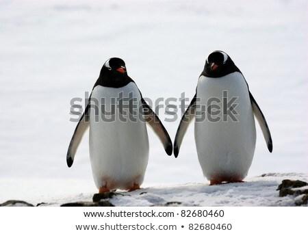 c7888c019f3a55 Twee lopen natuur zomer dag liefde Stockfoto © OleksandrO · Pinguin ijs  cute vector zonnebril