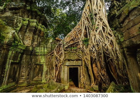 Tree roots at Ta Prohm Stock photo © lichtmeister