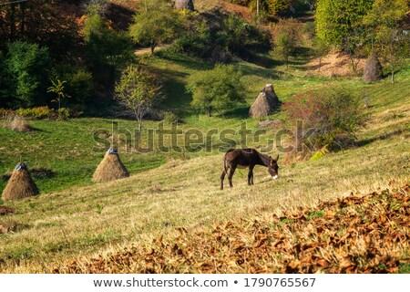 Najaar loof bomen bergen weide hooiberg Stockfoto © Arsgera