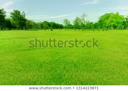 Streszczenie lata pole trawy niebo szeroki tle Zdjęcia stock © karandaev