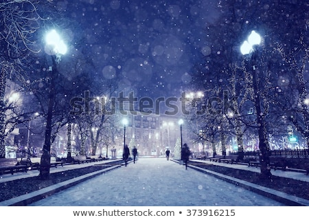 trees in peaceful winter evening stock photo © ansonstock